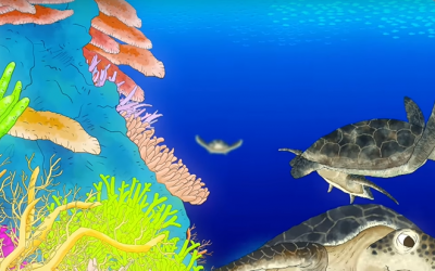小琉球珊瑚礁