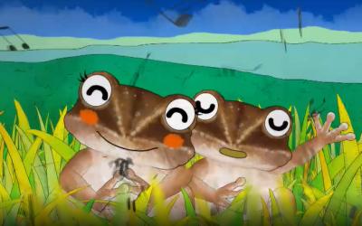 蛙界暖男─豎琴蛙